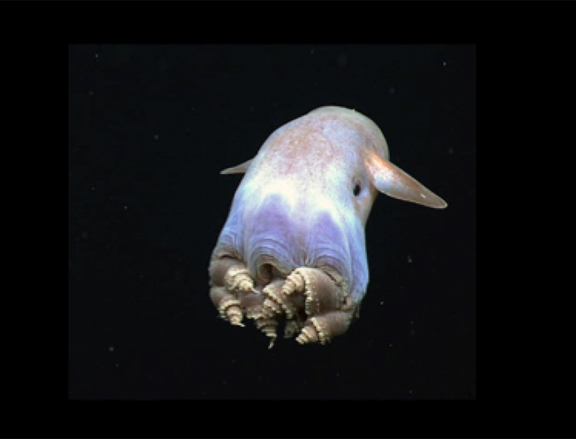The Deepest Parts Of The Caribbean Sea